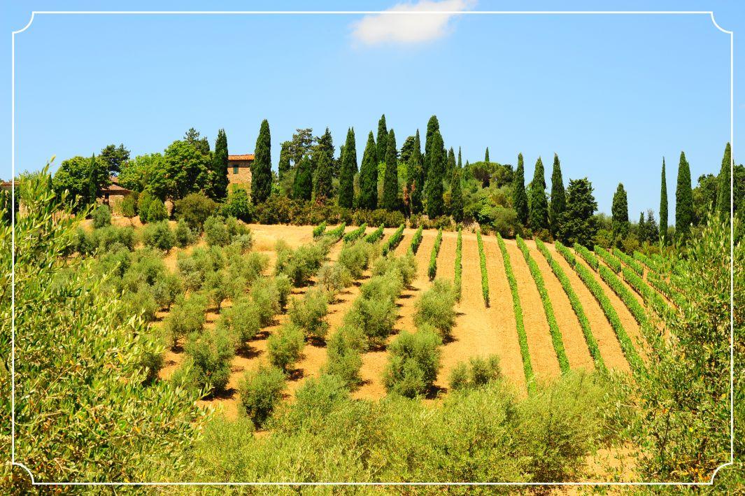 Ültetvényeink Dél-Olaszországban